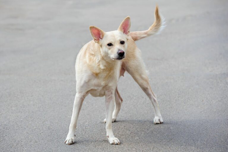 Ein herrenloser Hund auf einer Straße
