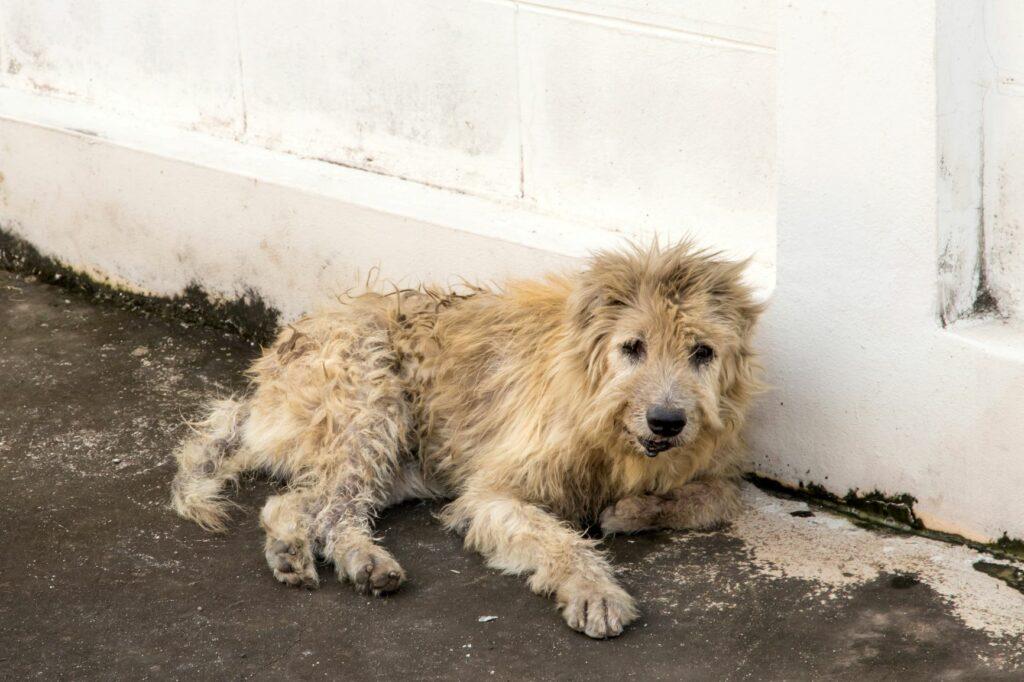 Straßenhund liegt an einer Hauswand
