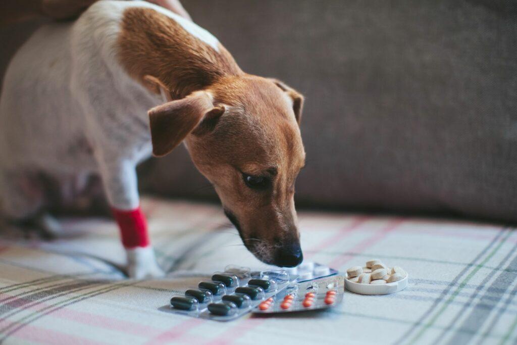 Medikamente können Schmerzen beim Hund lindern.