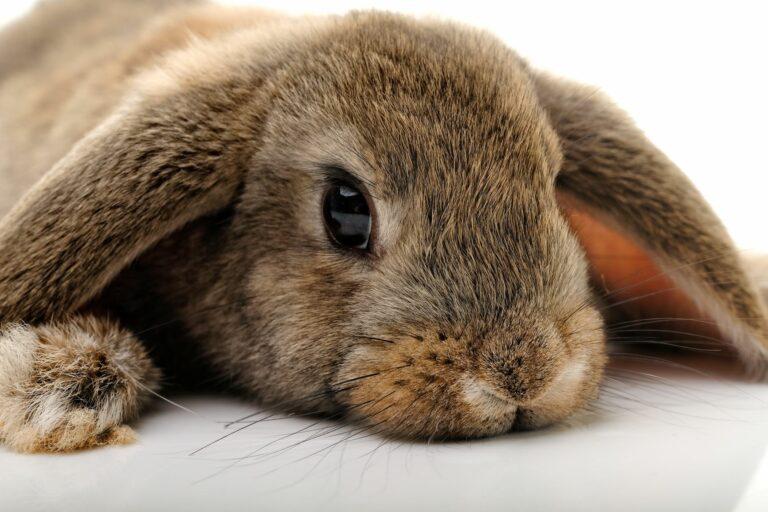 Milben bei Kaninchen