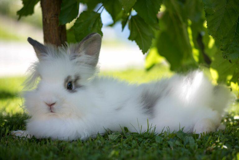 Kaninchen liegt bei Hitze unter einem Baum