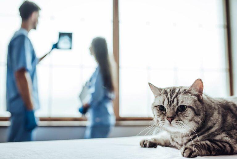 Röntgen bei Katzen