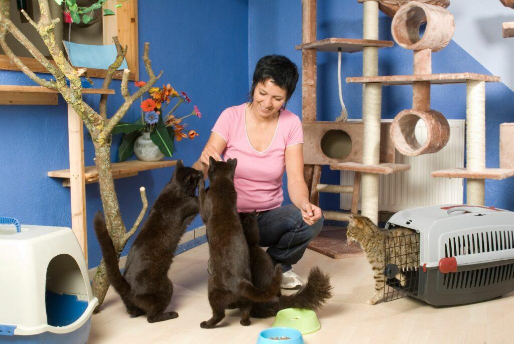 Frau spielt mit Katzen im Katzenhotel.