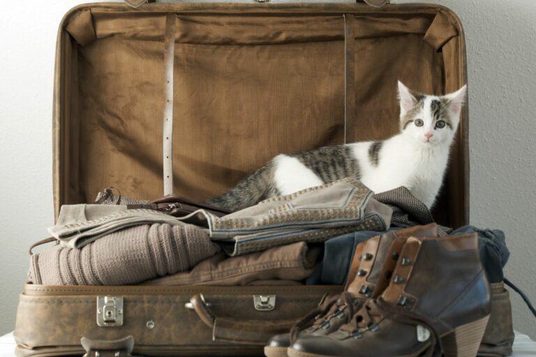 Ohne Katze in den Urlaub.