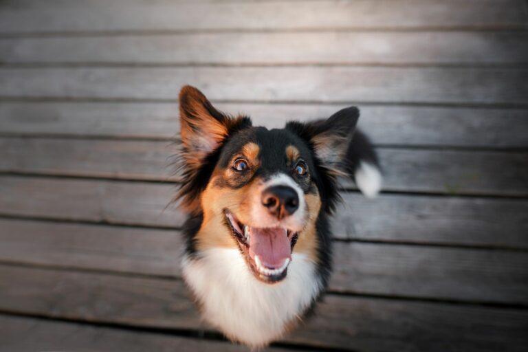 Mundgeruch bei Hunden