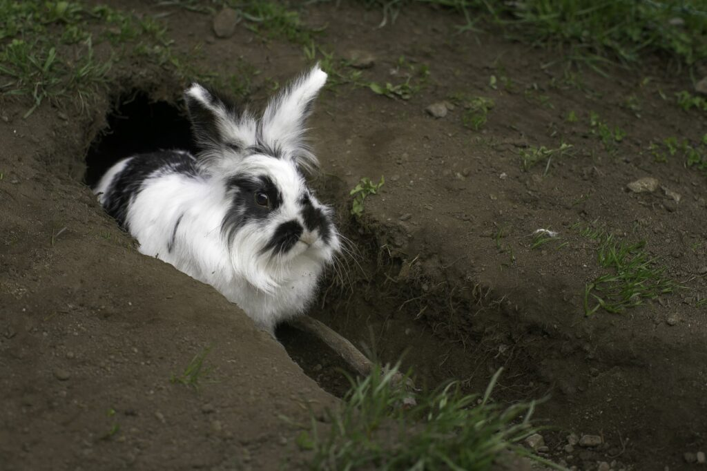 Kaninchen buddeln bei Hitze Löcher zur Abkühlung.