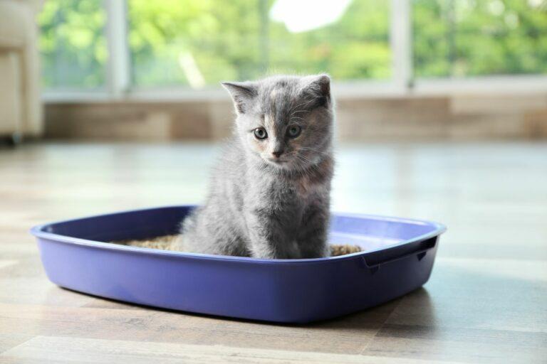 Umgang-mit Katzenstreu