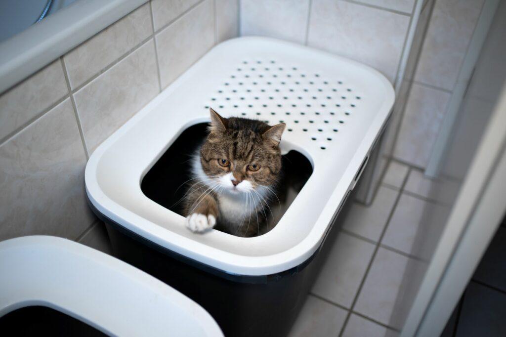Katzenklo kreativ im Badezimmer verstecken
