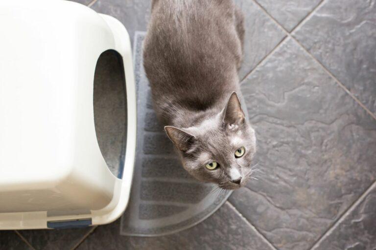 Katze steht vor einer Katzentoilette