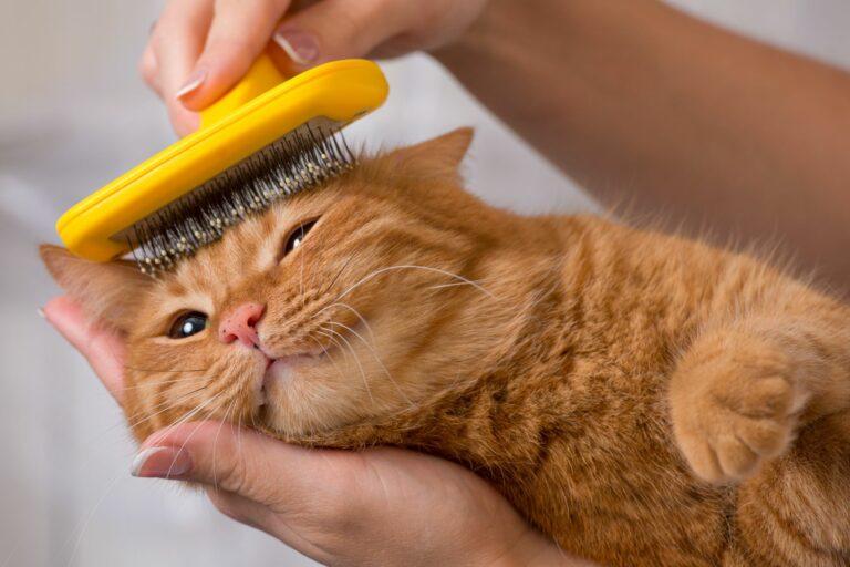 Fellfplege sorgt für Entspannung bei Katzen.