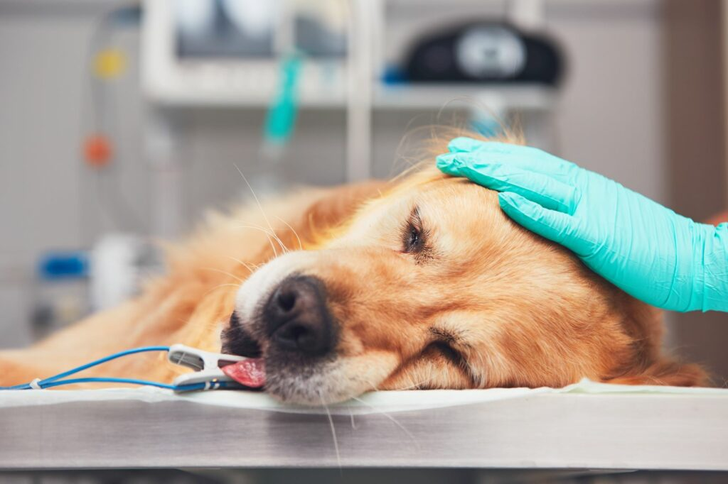 Hund beim Tierarzt auf der Liege.