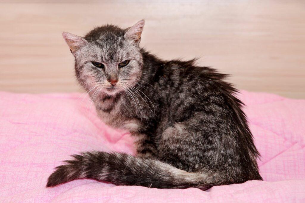 Altersschwache Katze