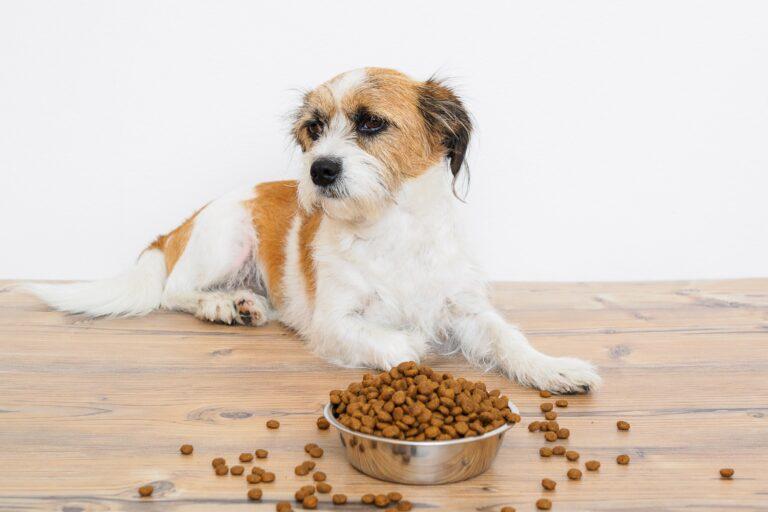 Hund liegt vor einem vollen Futternapf.