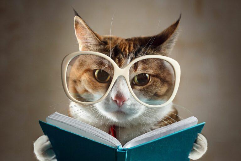 Katze als Vorbild mit Brille und Buch.