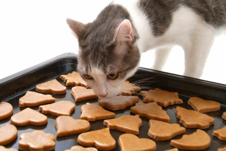 Katze schnuppert an gebackenen Katzenkeksen.