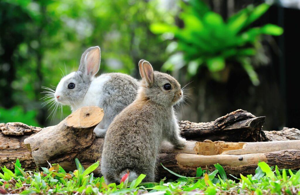Kaninchen mit einem Holzhaufen beschäftigen.