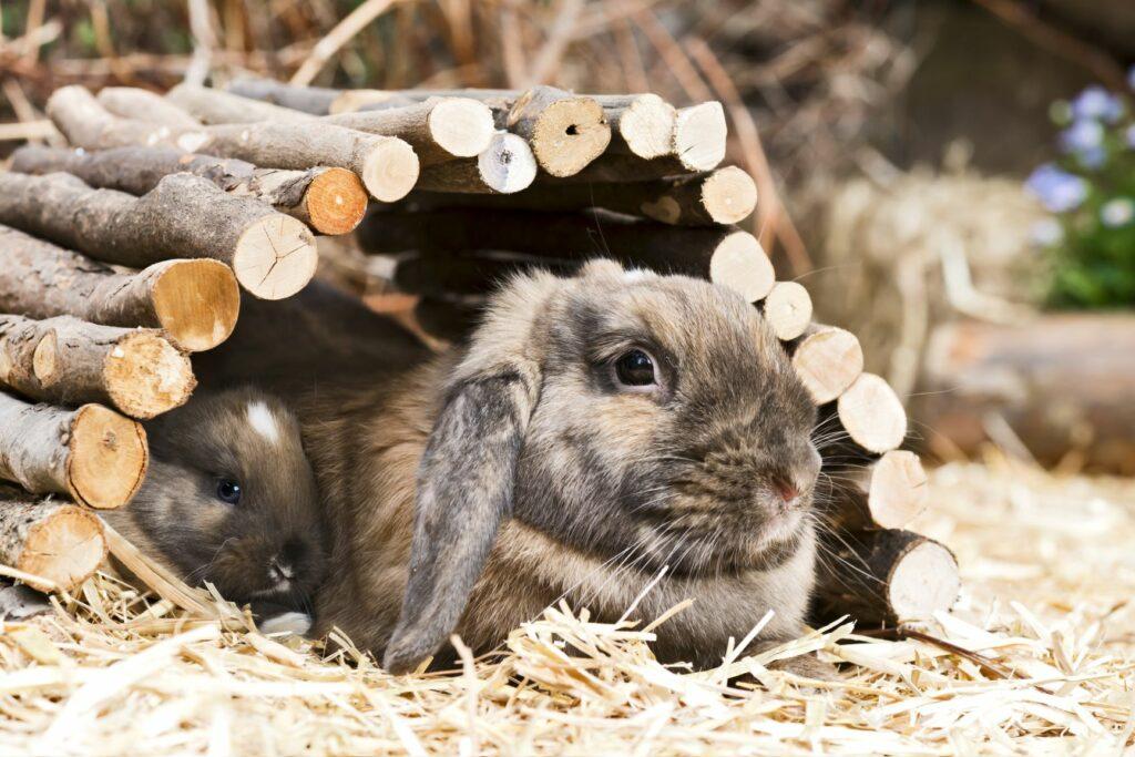 Kaninchen liegt unter einem Tunnel.