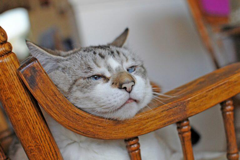 Altersschwache Katze liegt im Schaukelstuhl.