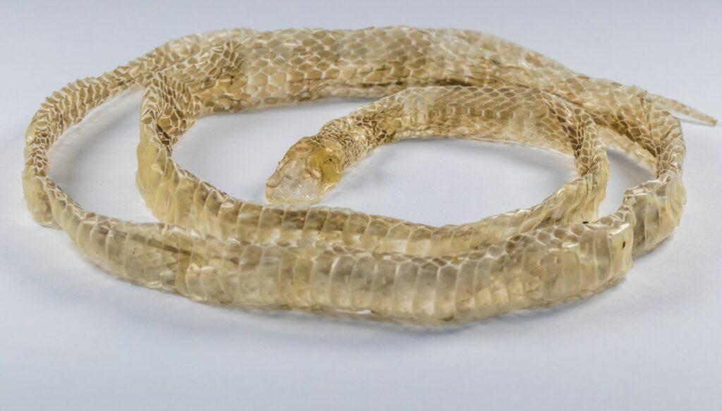 Die abgestreifte Haut einer Schlange