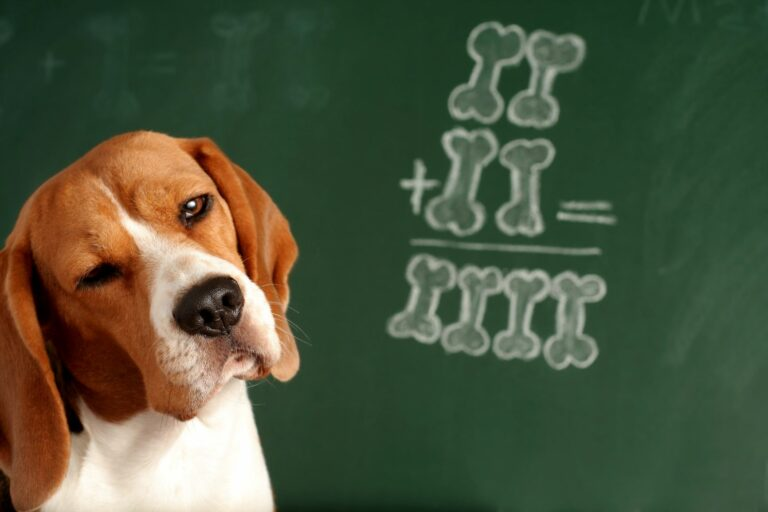 Was verstehen Hunde