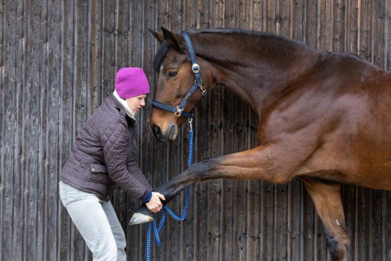 Frau untersucht Pferd auf Hufrehe