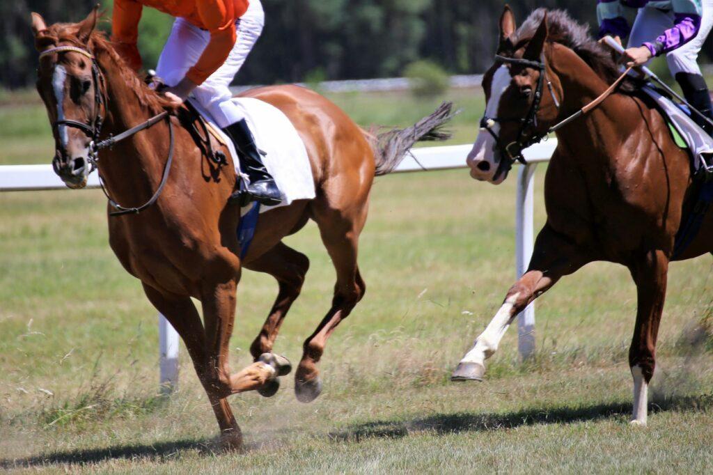 Vollblüter beim Pferderennen