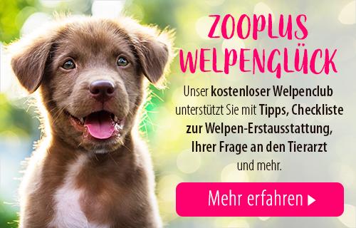 DE_Welpenclub_Breed_Sidebanner
