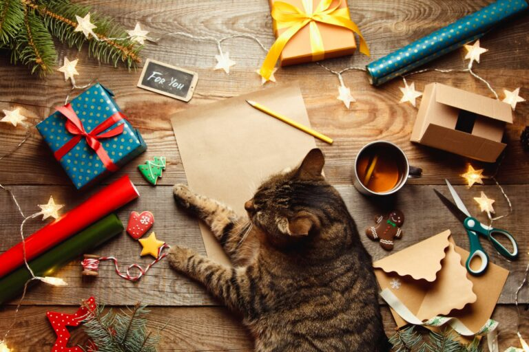 Eine Katze hilft einen Katzen Adventskalender zu basteln.