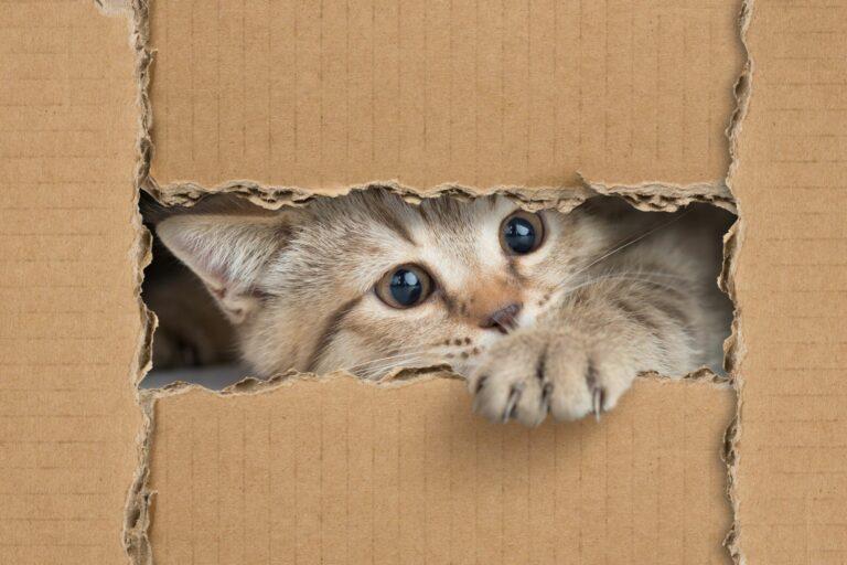 Katzenspielzeug selber machen aus Kartons.