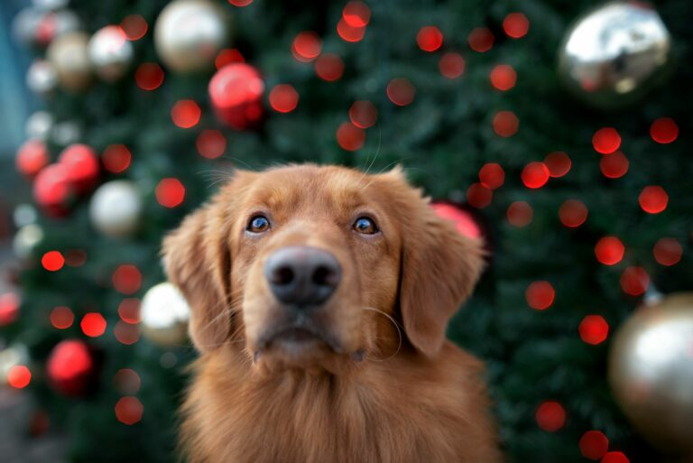 Hund vor einem Weihnachtsbaum.