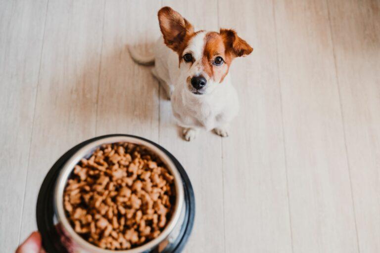 Sitzender Hund wartet auf sein Futter