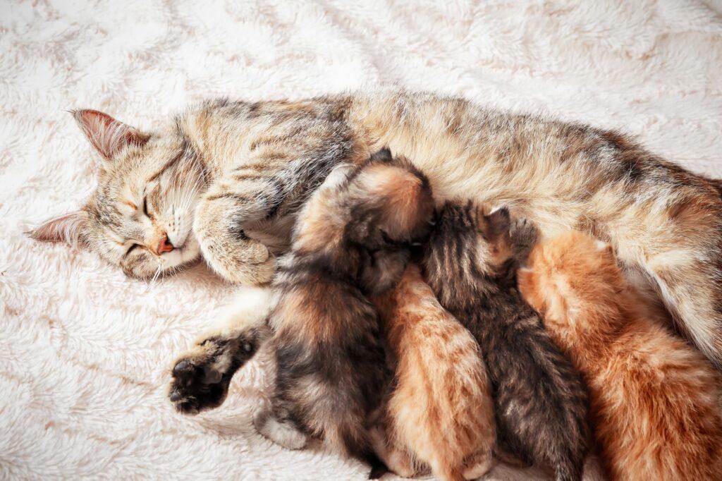 Kitten trinken Muttermilch