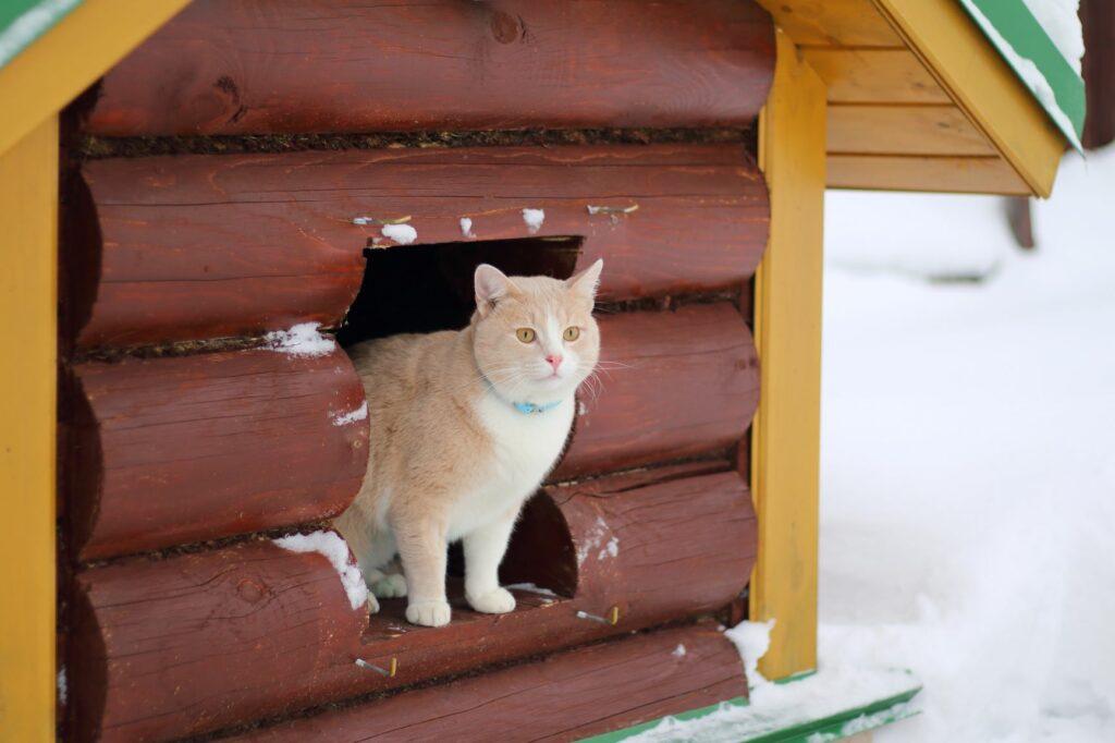 Katze schaut aus einem Katzenhaus im Winter.