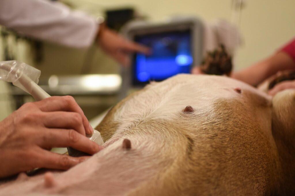 Ultraschall beim Hund