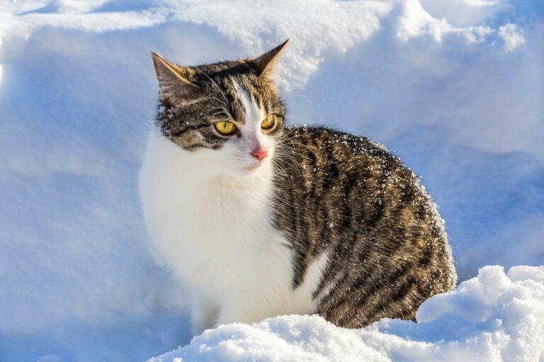 Katze sitzt im Winter im Schnee.