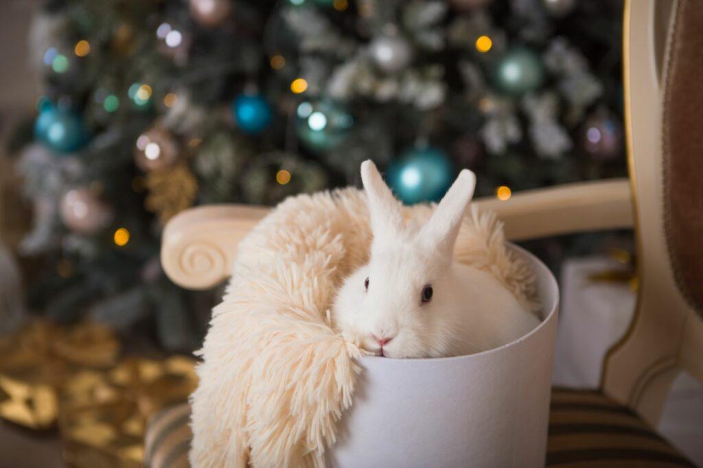 Kaninchen liegt in einer Kiste