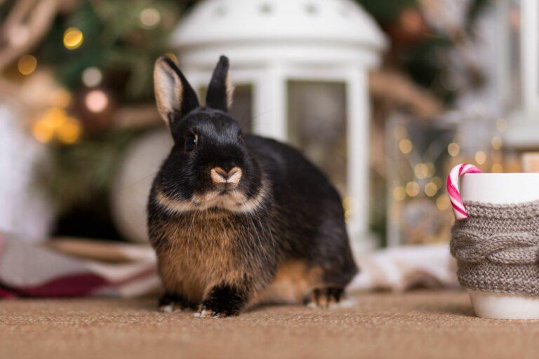 Kaninchen an Weihnachten vor festlicher Dekoration