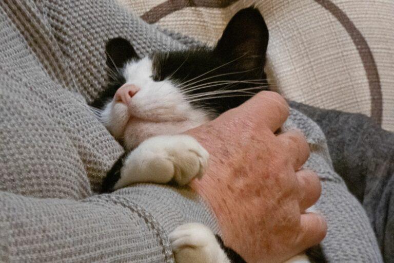 Therapiekatzen für den Mensch