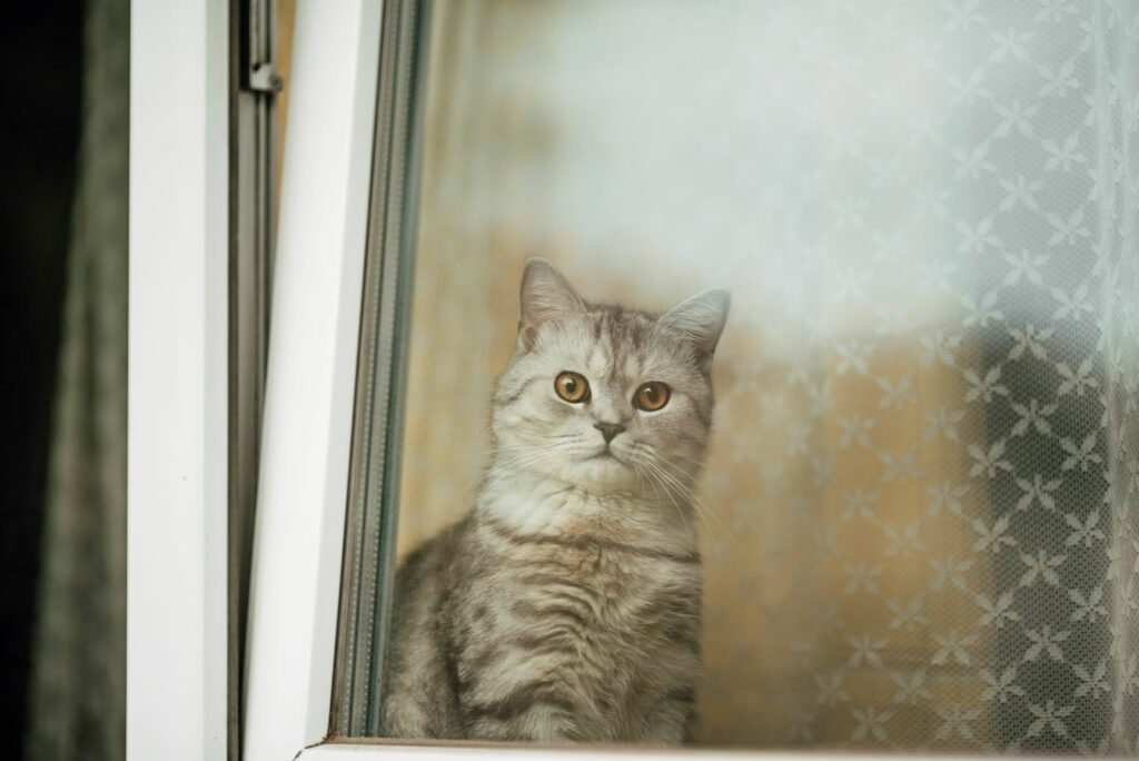 Wohnung katzensicher machen: Gekippte Fenster sind gefährlich