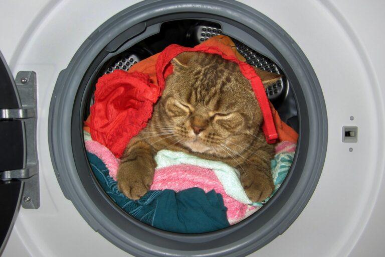 Eine Katze schläft in der Waschemaschine