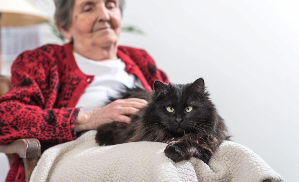 Therapiekatzen: So helfen Katzen kranken Menschen | zooplus