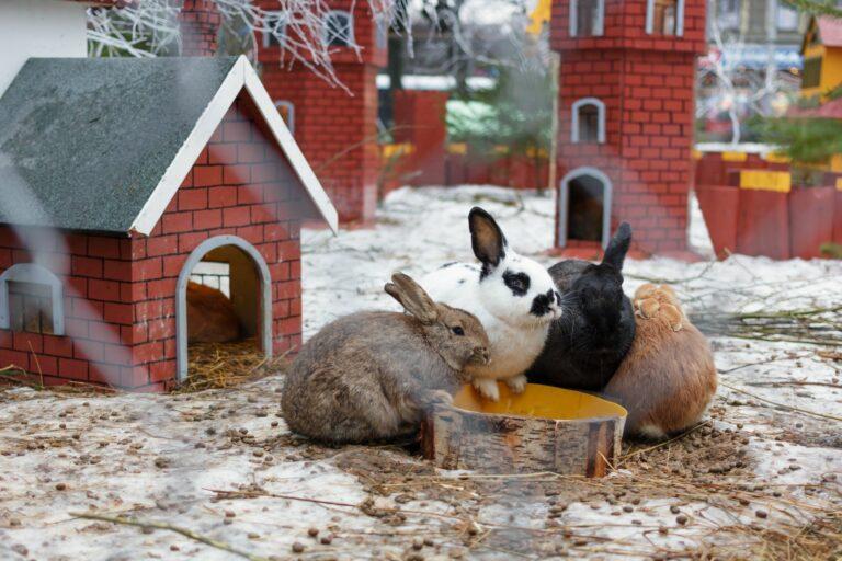 Durchfall kann für Kaninchen gefährlich werden.
