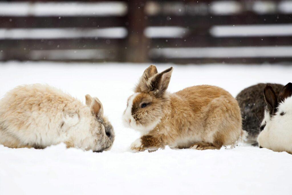 Kaninchen im Schnee.