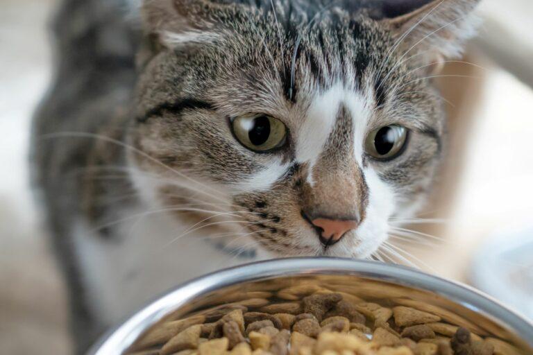 Am liebsten würden Katzen ihre Futtermenge selbst bestimmen.