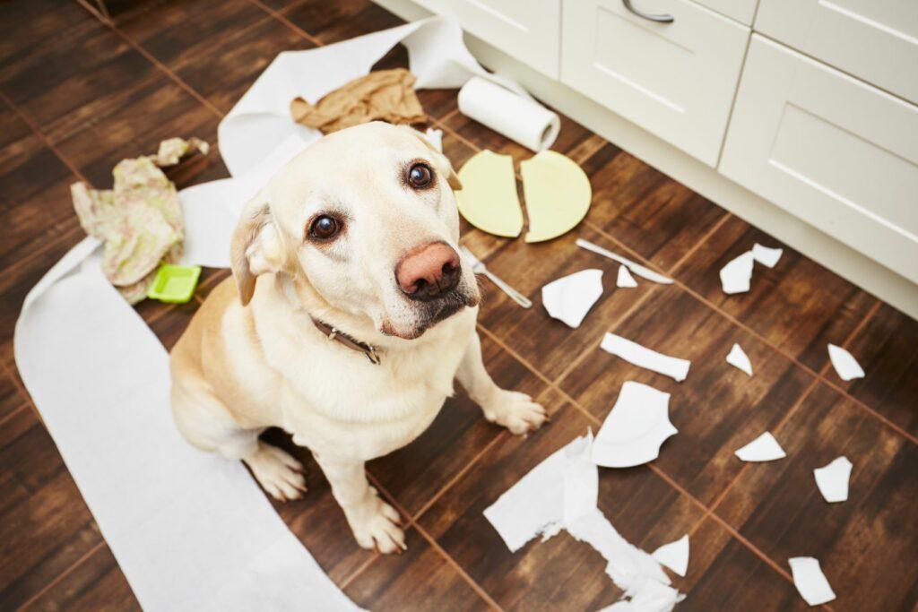 Hund hat Mülleimer in der Küche ausgeräumt..