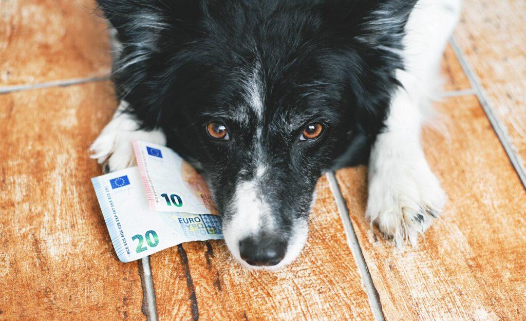 Geld Hundezüchter werden