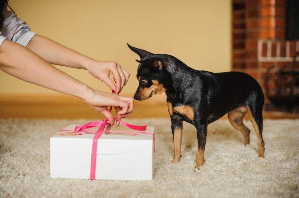 Hund bekommt sein Geschenk zum Valentinstag