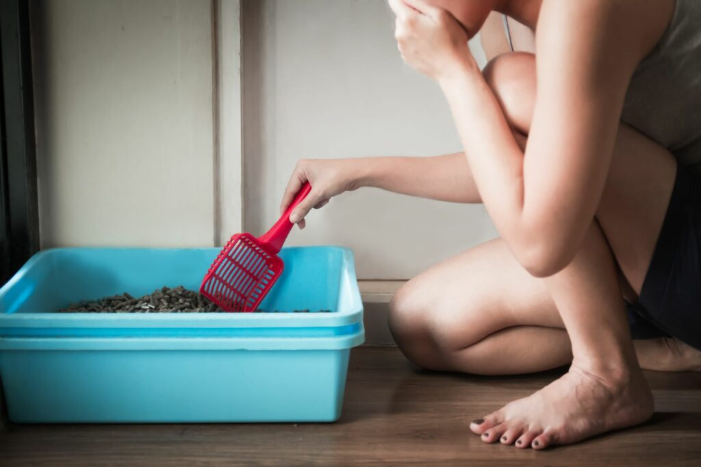 Frau säubert Katzenklo um Katzenurin-Geruch zu entfernen.