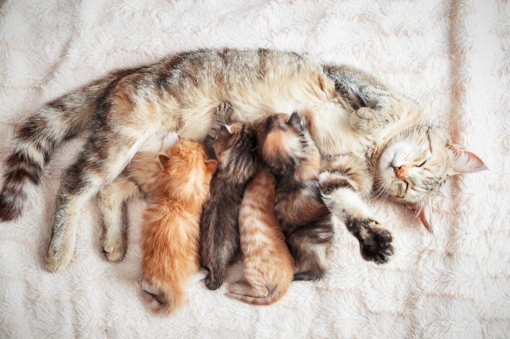 Wurmkur bei Katzen nach der Geburt
