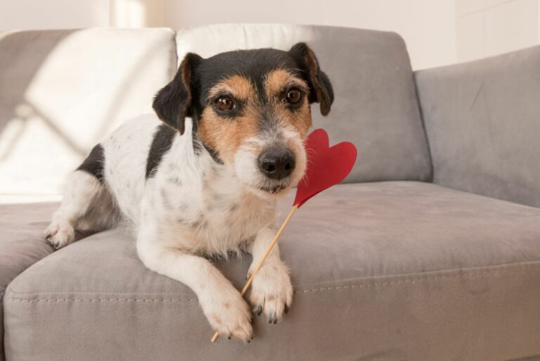 Valentinsag für Hunde